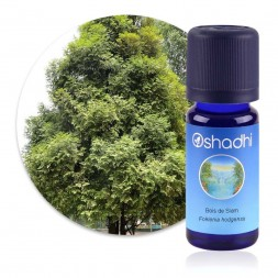 Bois de Siam - Fokienia hodgensii - huile essentielle