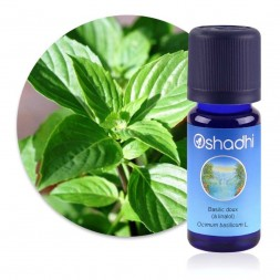 Basilic doux (à linalol) - Ocimum basilicum / Biologique huile essentielle