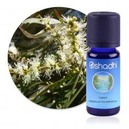 Cajeput - Melaleuca leucadendron / Sauvage - huile essentielle