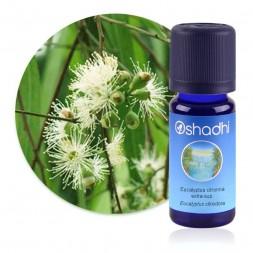 Eucalyptus citronné extra-sup. - Eucalyptus citriodora / Biologique - huile essentielle