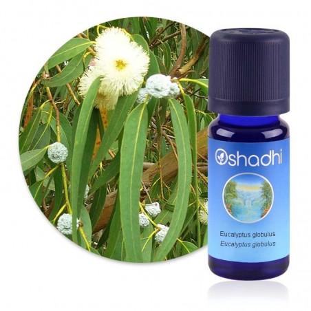 Eucalyptus globulus / Sauvage Biologique - huile essentielle