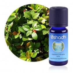 Gaulthérie odorante, extra (Wintergreen) - Gaultheria fragrantissima / Biologique - huile essentielle