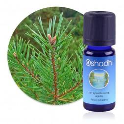 Pin sylvestre extra, aiguille - Pinus sylvestris / Sauvage Biologique - huile essentielle