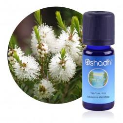 Tea-tree extra (m.a.) - Melaleuca alternifolia / Biologique