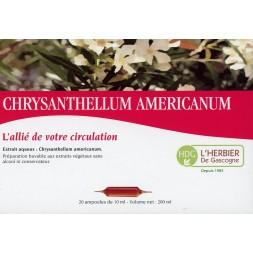 CHRYSANTHELLUM AMERICANUM Ampoules