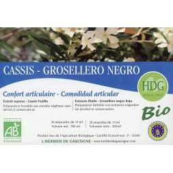 Cassis feuille Bio 1.05 gr Ampoules, Arrêté définitivement ! Alternative Cassis plantes fraîches SND