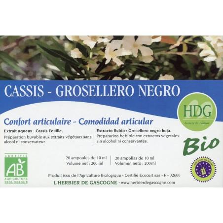 Cassis feuille Bio 1.05 gr Ampoules Remisé de 30% DLV au 03-2020